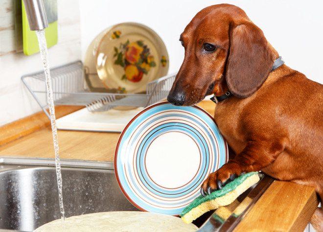 Vixi, até cachorro?© Vanoa2 | Dreamstime.com