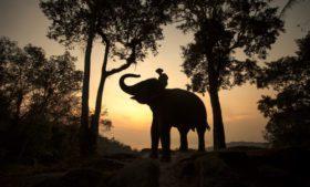 Turismo na Tailândia: Passeio com elefantes
