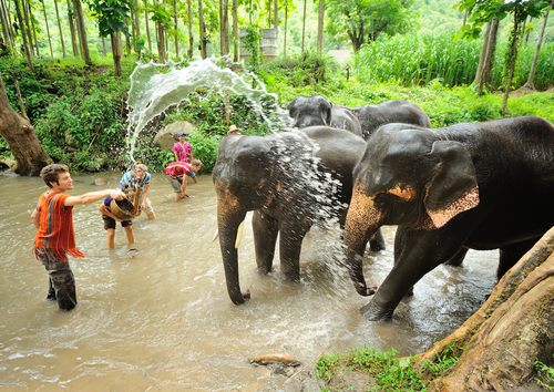 Banho dos elefantes. Foto: Shutterstock