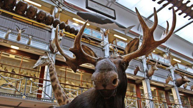 O Museu oferece um passeio cultural e histórico, algo mágico sobre os animais nativos que vivem na Irlanda. Foto:Natural Museum of History
