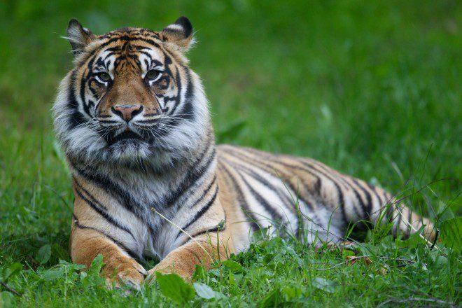 Dublin Zoo é pra quem gosta de aventura. Foto: Dublin Zoo