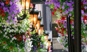 5 razões para você celebrar a primavera europeia