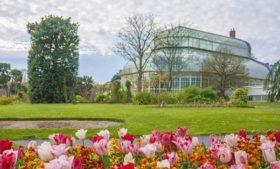 Conheça o Jardim Botânico Nacional da Irlanda