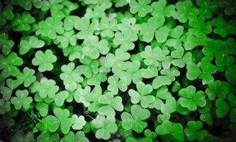 Feriados na Irlanda: quais são as principais datas comemorativas?