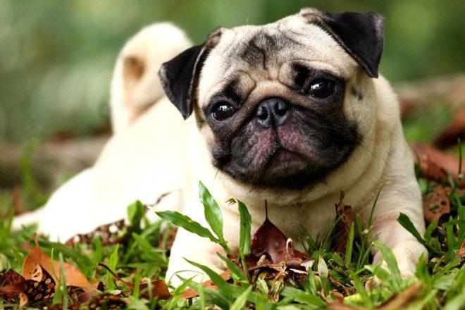 Proprietários precisam pagar taxa para poder ter cães em casa. Foto: Melvinlee/Dreamstime
