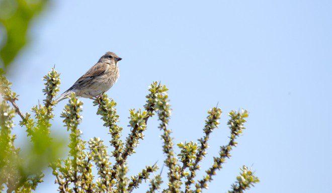 Pássaros são vistos durante todas as estações do ano no local. Foto: Kieran Li/Dreamstime