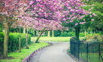5 razões para chegar na Irlanda na primavera