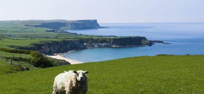 Como foi a minha experiência como au pair no interior da Irlanda