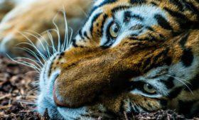 Dublin Zoo: como visitar o zoológico da capital irlandesa