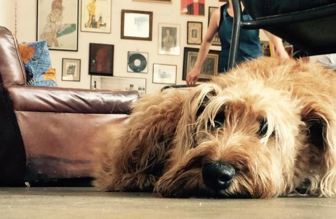 9 pubs e restaurantes dog friendly em Dublin