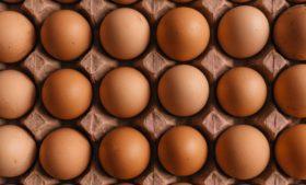 Gripe aviária: ovos acabam e Irlanda precisa importar produto