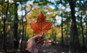 Intercâmbio voluntário no Canadá: descubra como fazer o seu